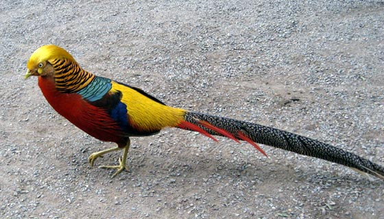 Brightly coloured bird